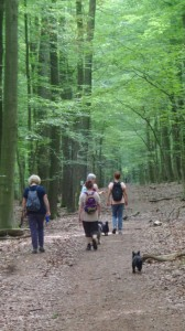 """Wanderung im """"Urwald"""" rund um die Scheune Neuhaus"""